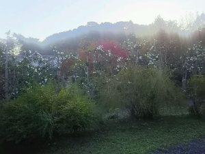 梅松苑 ~10月30日~