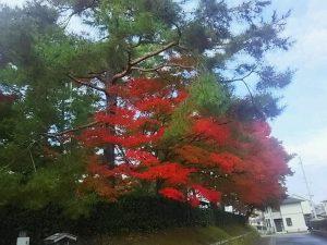 梅松苑 ~11月6日~